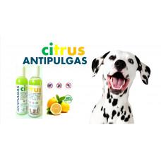 Citrus Antipulgas Shampoo, 1 Lt.